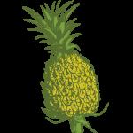 Bittermens Tepache Spiced Pineapple Liqueur
